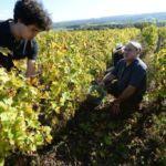 2014-10-18-Courdemanche_Vendanges_JB_Métais (67)